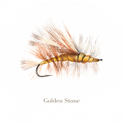 Golden Stone, trout fly, watercolour painted by L.C. Smith