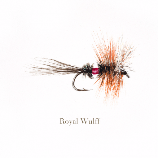 Royal Wulff, trout fly, watercolour painted by L.C. Smith